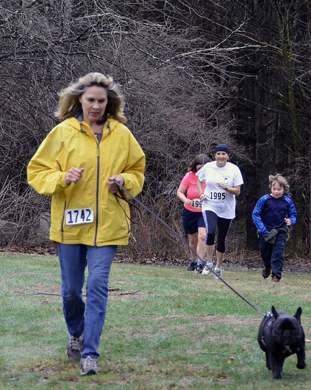 French Bulldog competing in 5K