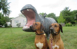 5 Tips for Healthy Dog Teeth