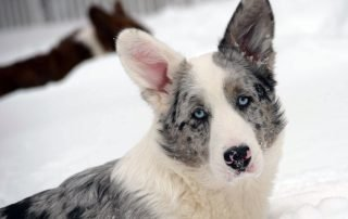 Winter Care for your dogs