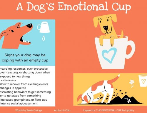 A Dog's Emotional Cup